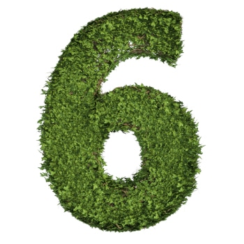 Ivy plant with leaves, green creeper bush and vines forming number six, 6, alphabet text font character isolated on white in nature, growth and eco environment concept. 3d tree illustration.
